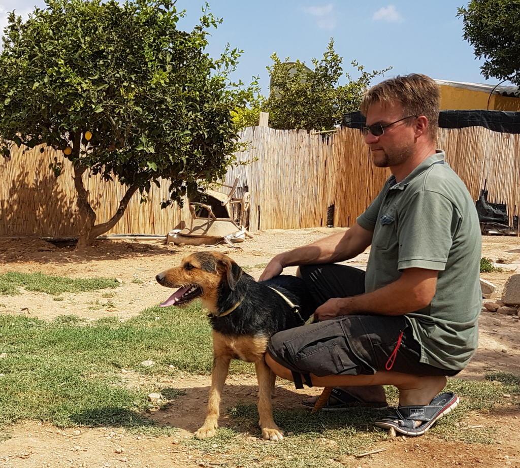 Bildertagebuch - Felix (Wesley) möchten mit Ihnen so einige Abenteuer bestehen - VERMITTELT - 33936428tf