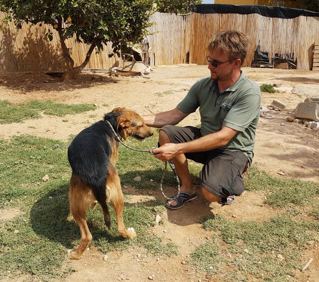 Bildertagebuch - Rusty (vorher Gus) wartet in der spanischen Pension auf seine Family - VERMITTELT - 33938674vy
