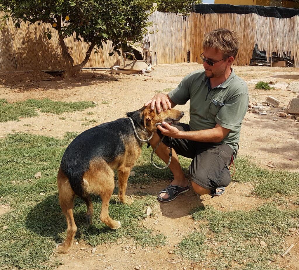 Bildertagebuch - Rusty (vorher Gus) wartet in der spanischen Pension auf seine Family - VERMITTELT - 33938676ak