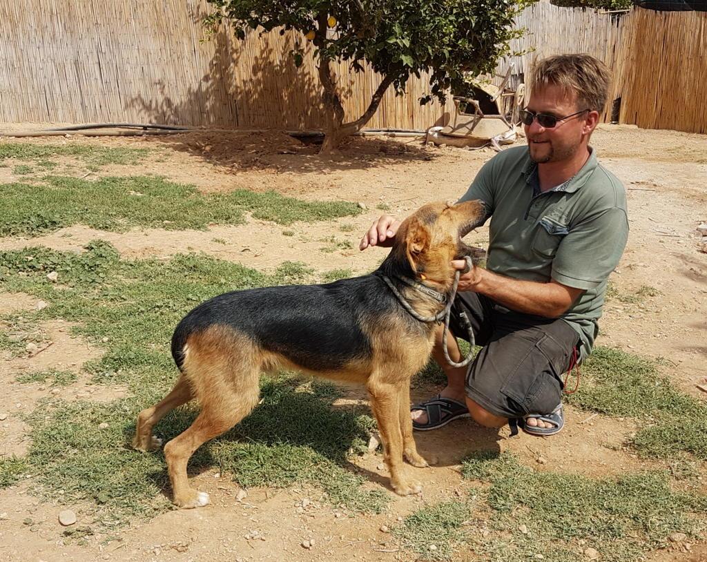 Bildertagebuch - Rusty (vorher Gus) wartet in der spanischen Pension auf seine Family - VERMITTELT - 33938677tg