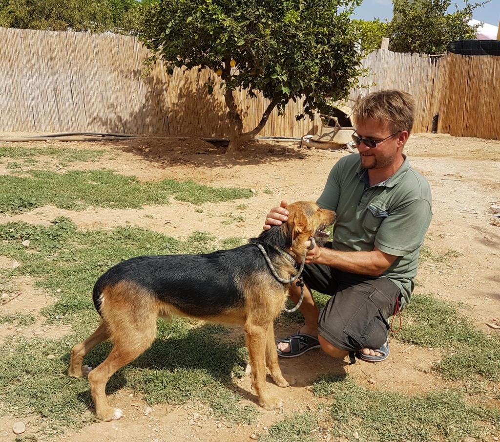 Bildertagebuch - Rusty (vorher Gus) wartet in der spanischen Pension auf seine Family - VERMITTELT - 33938678ws