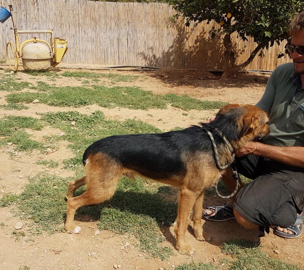 Bildertagebuch - Rusty (vorher Gus) wartet in der spanischen Pension auf seine Family - VERMITTELT - 33938679pi