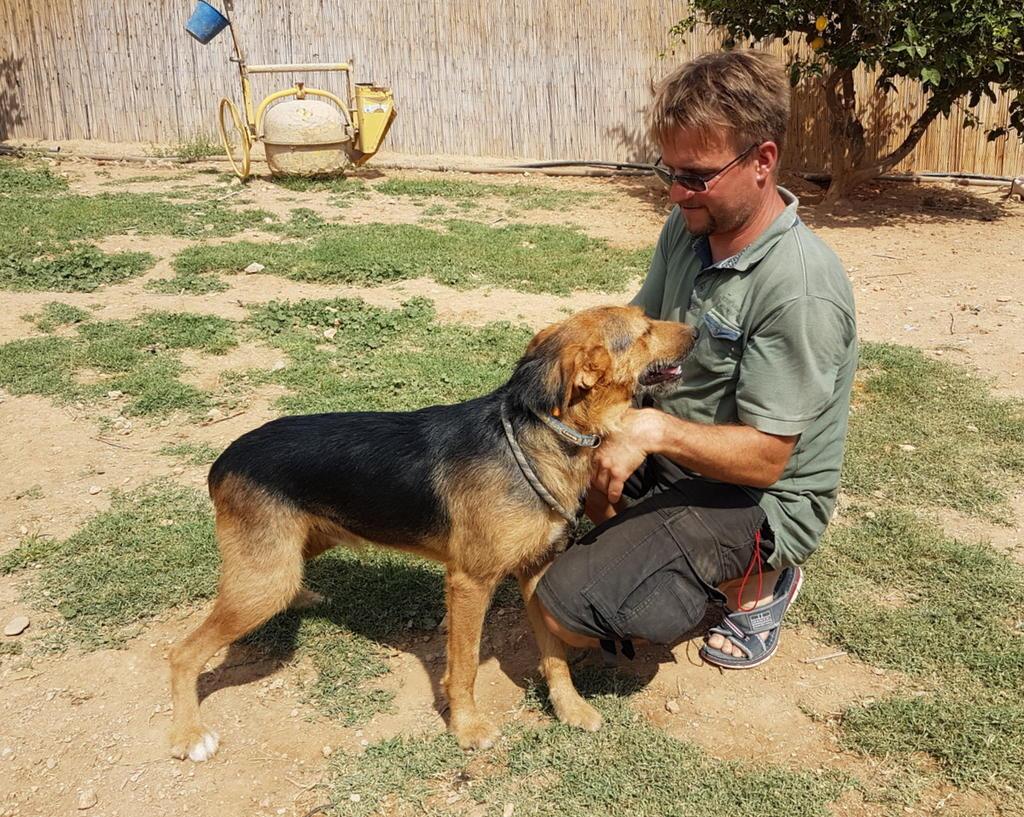 Bildertagebuch - Rusty (vorher Gus) wartet in der spanischen Pension auf seine Family - VERMITTELT - 33938681pk