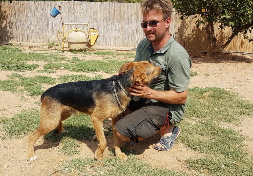 Bildertagebuch - Rusty (vorher Gus) wartet in der spanischen Pension auf seine Family - VERMITTELT - 33938682di
