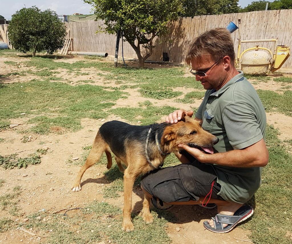 Bildertagebuch - Rusty (vorher Gus) wartet in der spanischen Pension auf seine Family - VERMITTELT - 33938692qd