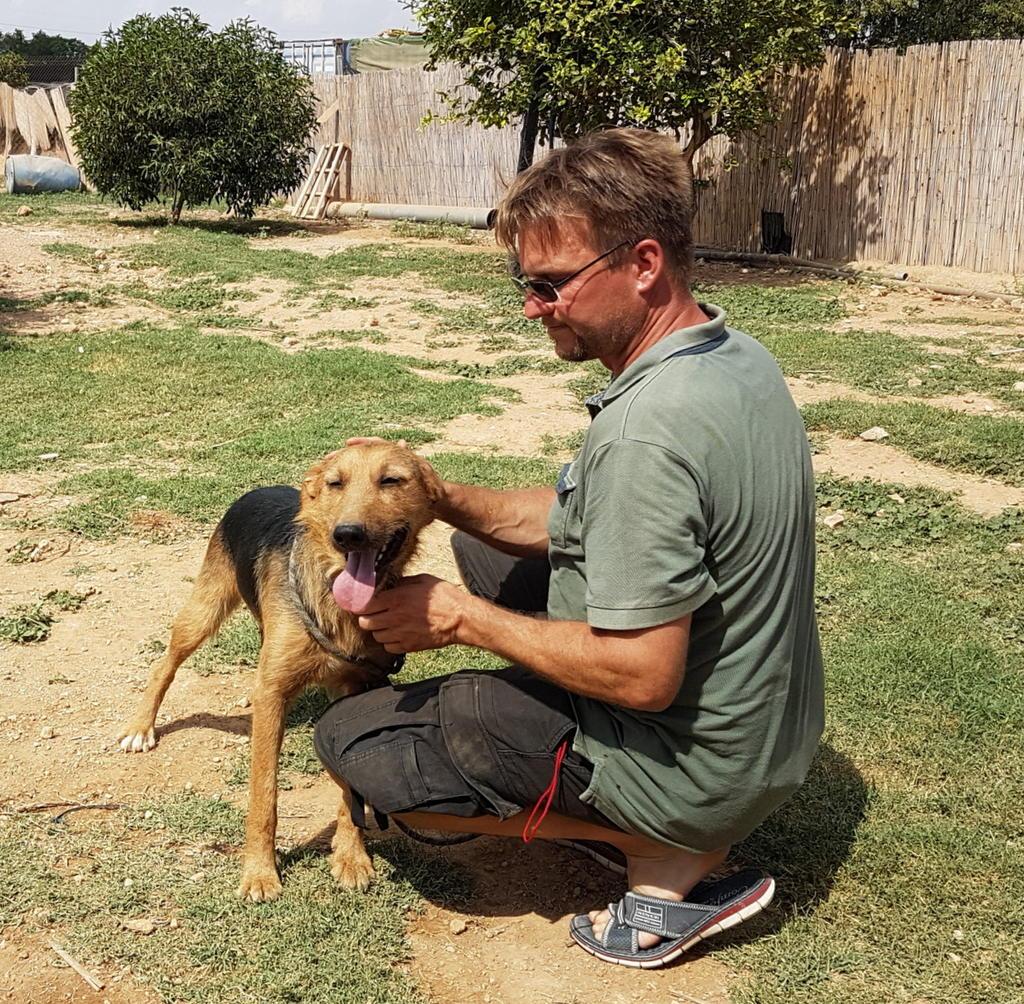 Bildertagebuch - Rusty (vorher Gus) wartet in der spanischen Pension auf seine Family - VERMITTELT - 33938694fl
