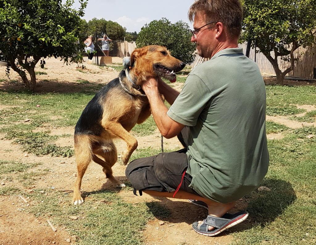 Bildertagebuch - Rusty (vorher Gus) wartet in der spanischen Pension auf seine Family - VERMITTELT - 33938695kk