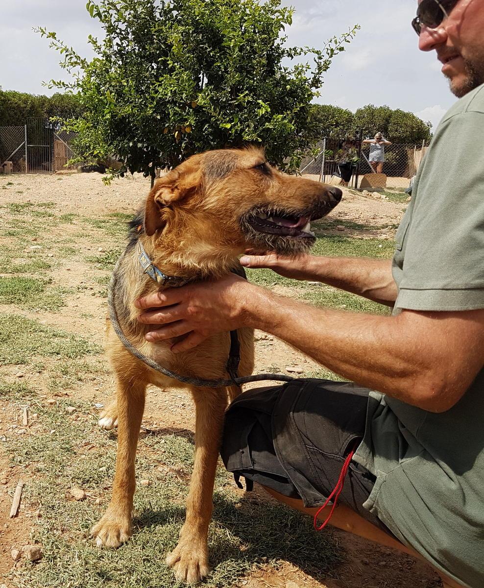 Bildertagebuch - Rusty (vorher Gus) wartet in der spanischen Pension auf seine Family - VERMITTELT - 33938701az