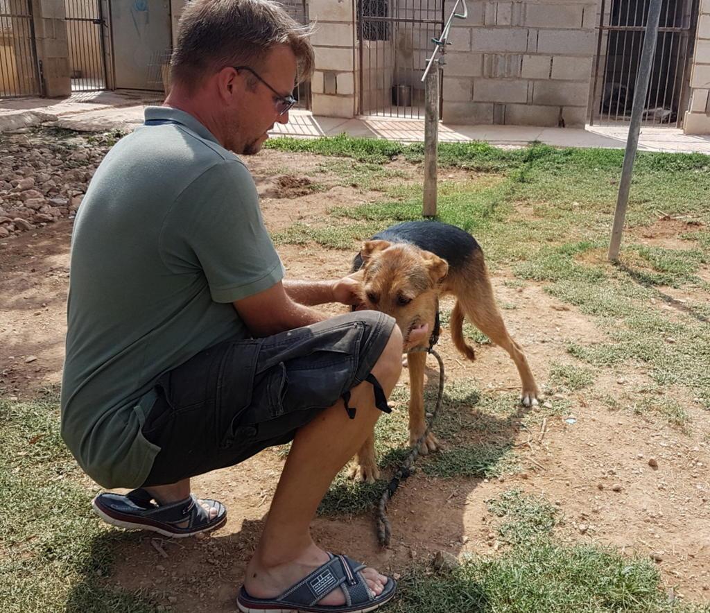 Bildertagebuch - Rusty (vorher Gus) wartet in der spanischen Pension auf seine Family - VERMITTELT - 33938710cj