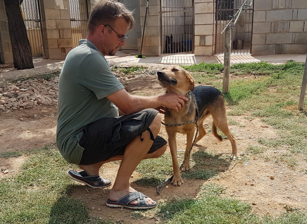 Bildertagebuch - Rusty (vorher Gus) wartet in der spanischen Pension auf seine Family - VERMITTELT - 33938711kz