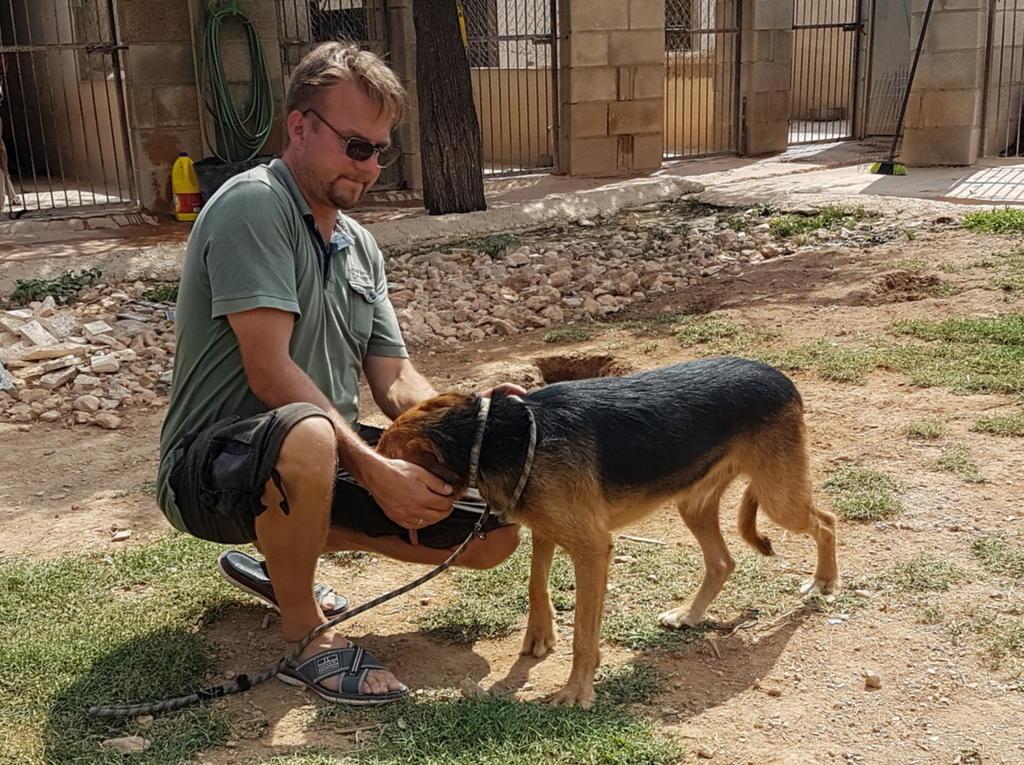 Bildertagebuch - Rusty (vorher Gus) wartet in der spanischen Pension auf seine Family - VERMITTELT - 33938713ch