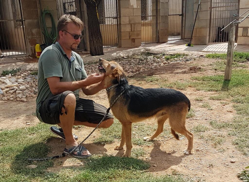 Bildertagebuch - Rusty (vorher Gus) wartet in der spanischen Pension auf seine Family - VERMITTELT - 33938714ud