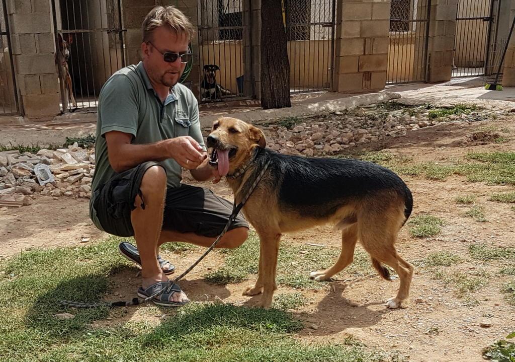 Bildertagebuch - Rusty (vorher Gus) wartet in der spanischen Pension auf seine Family - VERMITTELT - 33938716sc