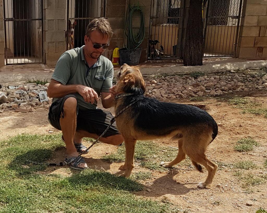 Bildertagebuch - Rusty (vorher Gus) wartet in der spanischen Pension auf seine Family - VERMITTELT - 33938717om