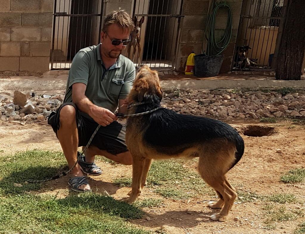Bildertagebuch - Rusty (vorher Gus) wartet in der spanischen Pension auf seine Family - VERMITTELT - 33938718ru