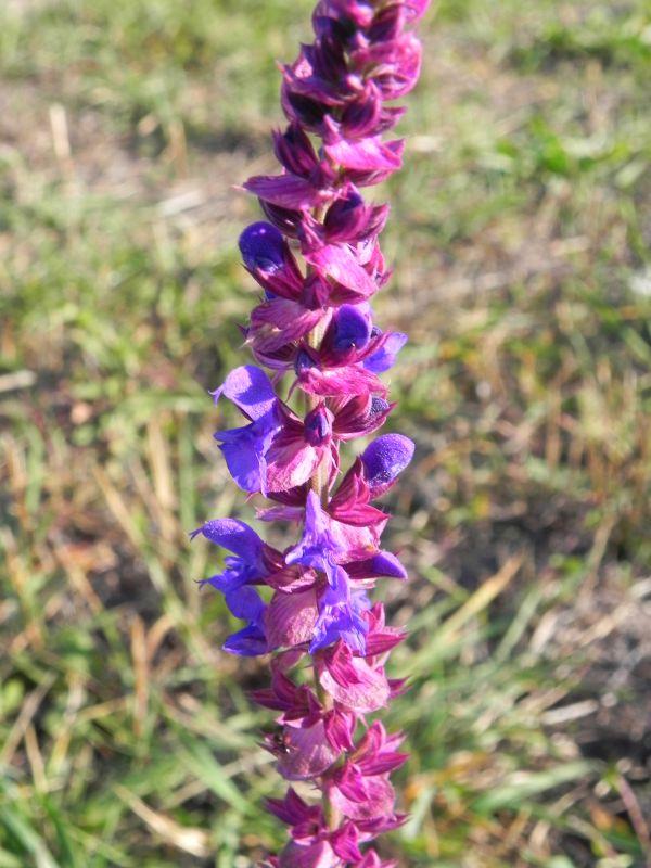 Wildblumen ( Sammelthread) - Seite 19 34077521gw