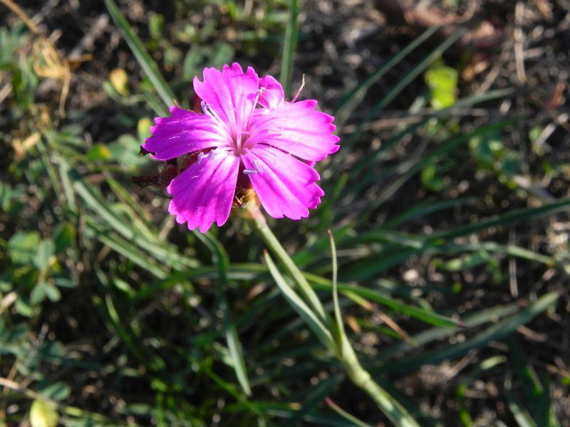 Wildblumen ( Sammelthread) - Seite 19 34077564ww