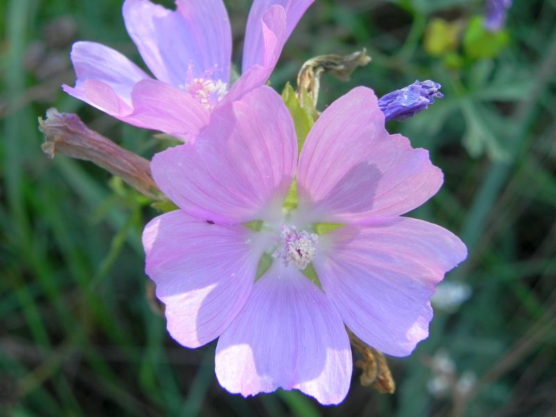Wildblumen ( Sammelthread) - Seite 19 34077565hl