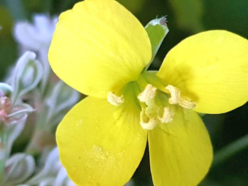 Wildblumen ( Sammelthread) - Seite 19 34077588mp
