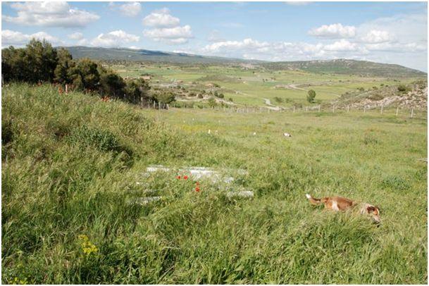 Neue Auffangstation....Tiere in Spanien 4381384