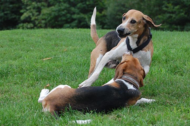 Nouvelles chiens partis le 29 juillet pour l'Allemagne 7801560mhz