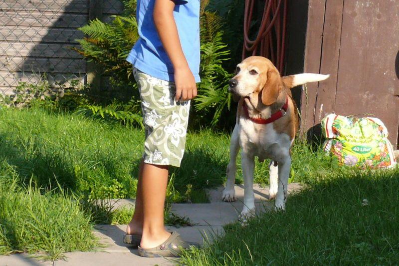 Nouvelles chiens partis le 29 juillet pour l'Allemagne 7841320ddh