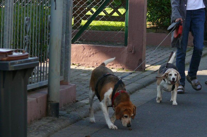 Nouvelles chiens partis le 29 juillet pour l'Allemagne 7841321mwr
