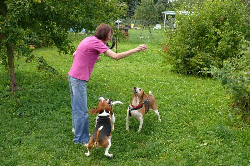 Nouvelles chiens partis le 29 juillet pour l'Allemagne 7899777osf