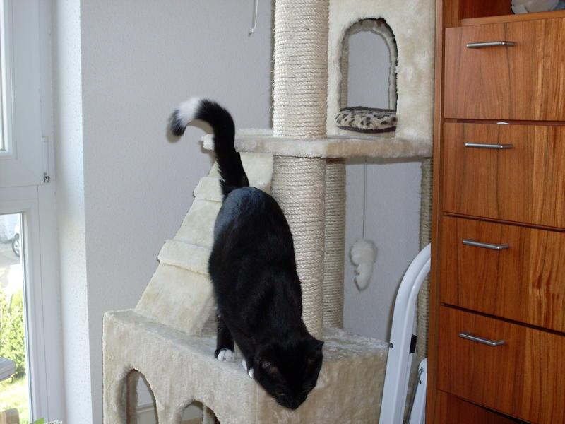 Wir suchen ein neues Zuhause (Katzen) - Seite 4 8621442ayq