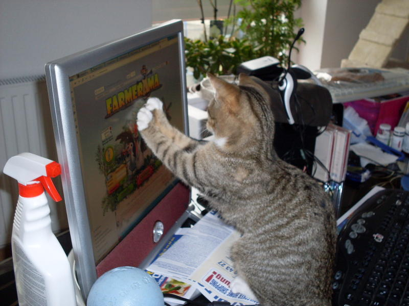 Wir suchen ein neues Zuhause (Katzen) - Seite 4 8621445jxw