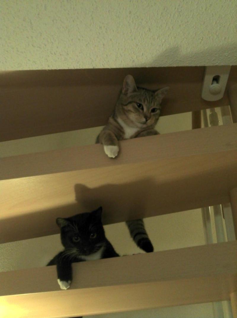 Wir suchen ein neues Zuhause (Katzen) - Seite 4 8803878ygd