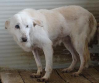 Hunde aus Italien suchen dringend Plätze!!! Ein ganzes Leben im Canile! - Seite 2 8892211dun