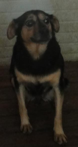 Hunde aus Italien suchen dringend Plätze!!! Ein ganzes Leben im Canile! 8899686hpd