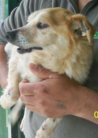 Hunde aus Italien suchen dringend Plätze!!! Ein ganzes Leben im Canile! 8899783zdy