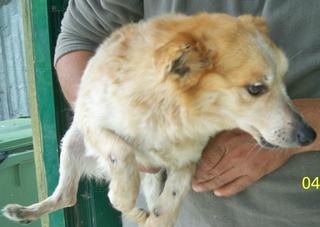 Hunde aus Italien suchen dringend Plätze!!! Ein ganzes Leben im Canile! 8899784yok