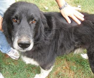 Hunde aus Italien suchen dringend Plätze!!! Ein ganzes Leben im Canile! 8899794cgr