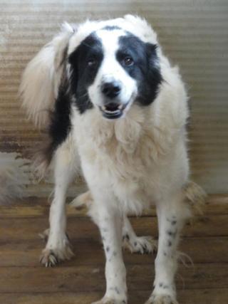 Hunde aus Italien suchen dringend Plätze!!! Ein ganzes Leben im Canile! - Seite 3 8899827nma