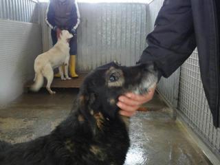 Hunde aus Italien suchen dringend Plätze!!! Ein ganzes Leben im Canile! 8899871ast