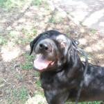 Hunde aus Italien suchen dringend Plätze!!! Ein ganzes Leben im Canile! 8899914gya