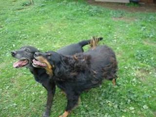Hunde aus Italien suchen dringend Plätze!!! Ein ganzes Leben im Canile! - Seite 14 8899974olm