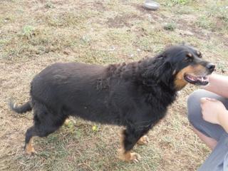 Hunde aus Italien suchen dringend Plätze!!! Ein ganzes Leben im Canile! 8900019myr