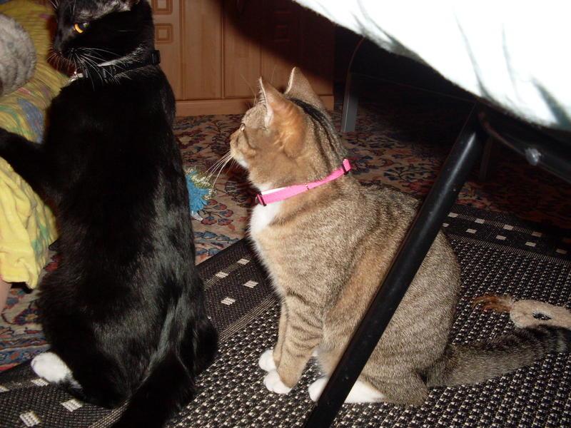 Wir suchen ein neues Zuhause (Katzen) - Seite 5 9181342izb
