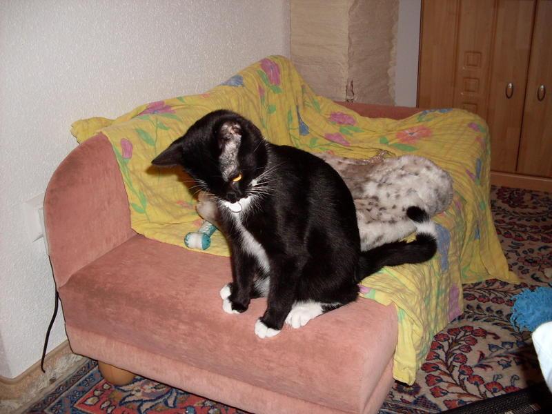 Wir suchen ein neues Zuhause (Katzen) - Seite 5 9181343pyx