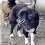 Hunde aus Italien suchen dringend Plätze!!! Ein ganzes Leben im Canile! 9190310xjj