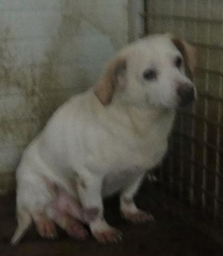 Hunde aus Italien suchen dringend Plätze!!! Ein ganzes Leben im Canile! - Seite 2 9626330jlt