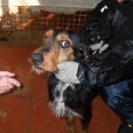 Hunde aus Italien suchen dringend Plätze!!! Ein ganzes Leben im Canile! - Seite 2 9634502xys
