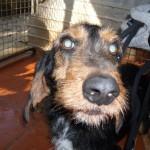 Hunde aus Italien suchen dringend Plätze!!! Ein ganzes Leben im Canile! - Seite 2 9634503eji
