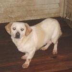 Hunde aus Italien suchen dringend Plätze!!! Ein ganzes Leben im Canile! - Seite 2 9634512csf