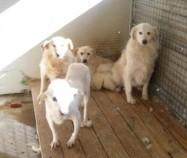 Hunde aus Italien suchen dringend Plätze!!! Ein ganzes Leben im Canile! - Seite 2 9650268tuo