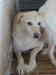 Hunde aus Italien suchen dringend Plätze!!! Ein ganzes Leben im Canile! - Seite 2 9650775dlq